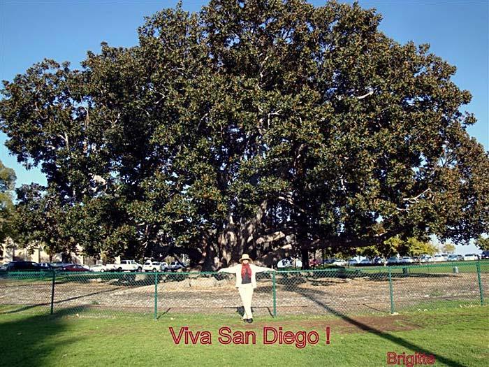 Viva San Diego Brigitte