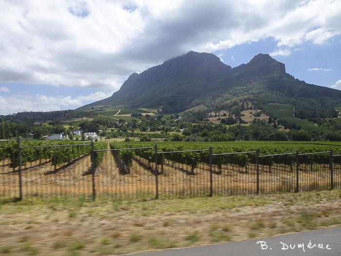 Cape Town, Route des vins