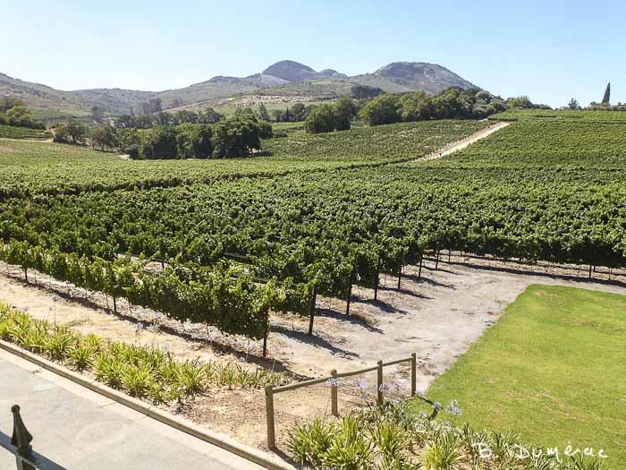 Cape Town, Route des vins 2