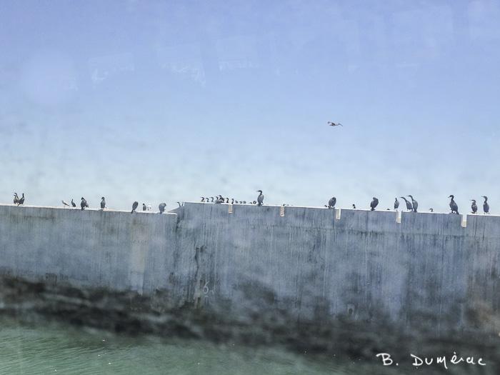 Robben Island 5