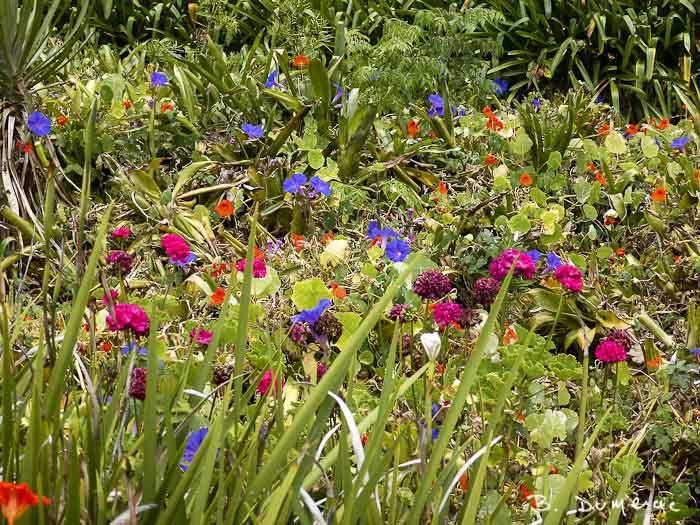 Longwood, jardin 2