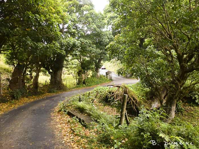 Petite route Sainte-Hélène 1
