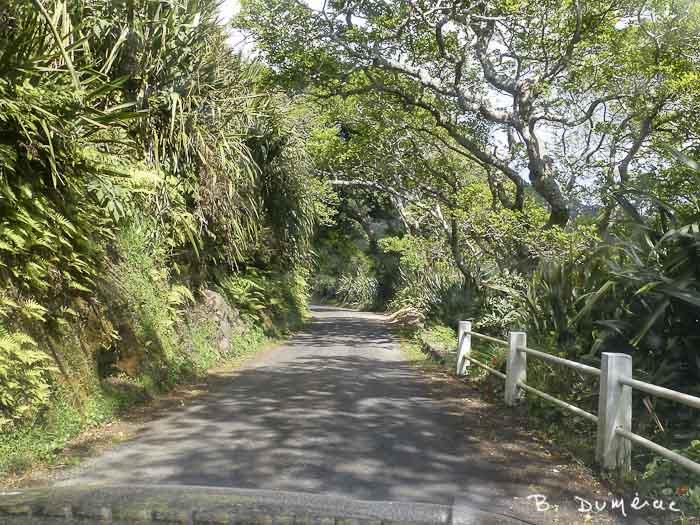 Petite route Sainte-Hélène 6