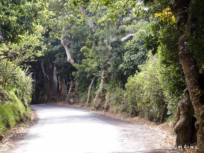 Petite route Sainte-Hélène 7