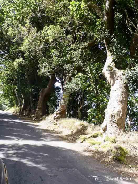 Petite route Sainte-Hélène 8