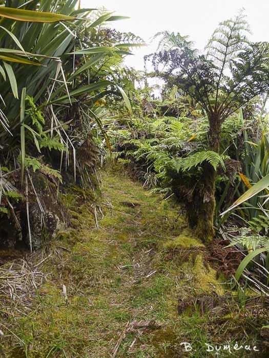 Sentier vers Dian'a's Peak