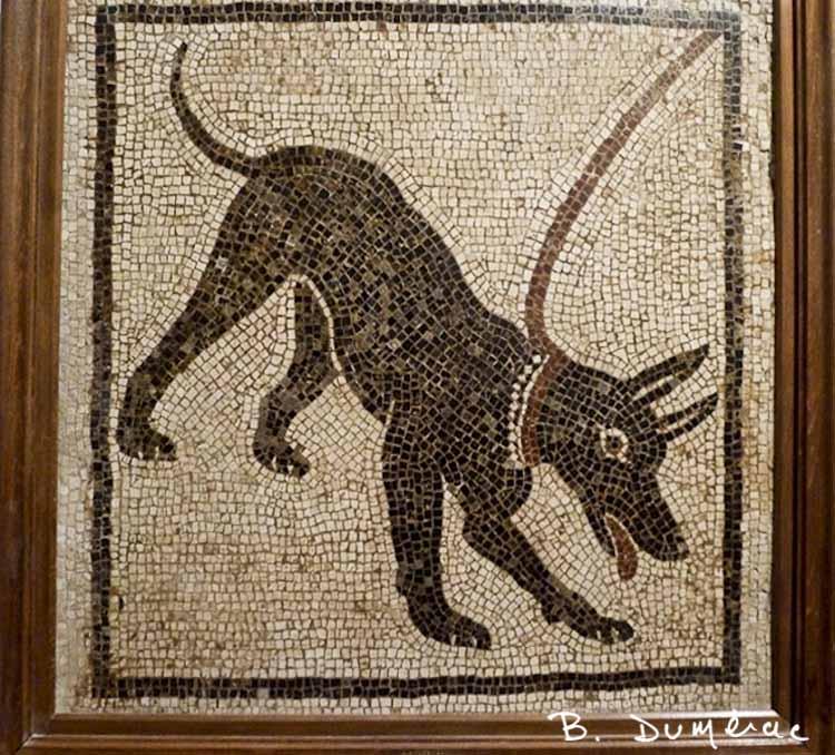 Mosaïque Naples chien